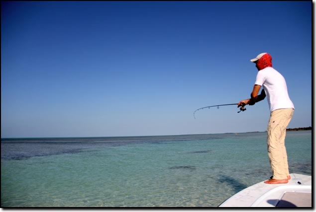 Bonefish for Bone fishing key west